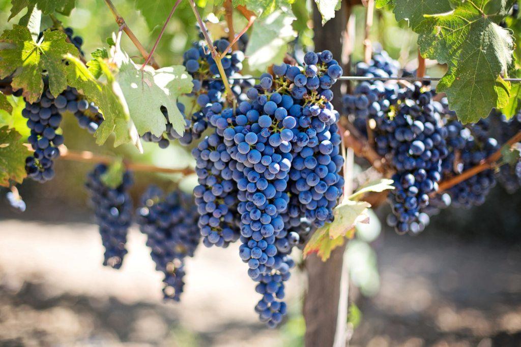 Warto myć i obierać owoce, które mogły być narażone na pestycydy